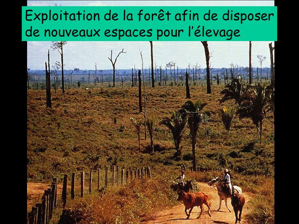 Exploitation de la forêt afin de disposer de nouveaux espaces pour l'élevage