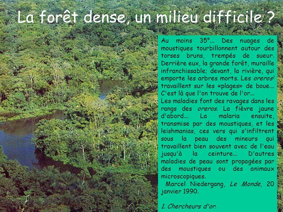 La forêt dense, un milieu difficile