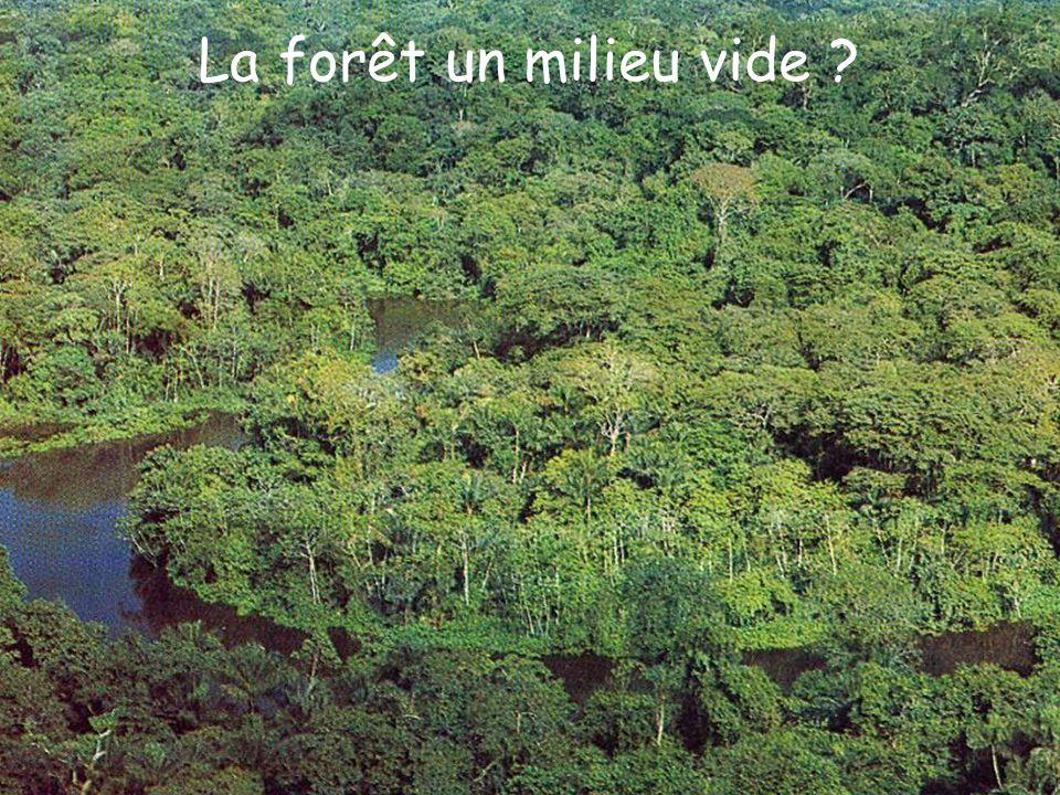 La forêt un milieu vide