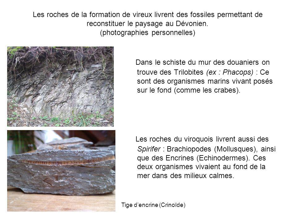 Les roches de la formation de vireux livrent des fossiles permettant de reconstituer le paysage au Dévonien. (photographies personnelles)