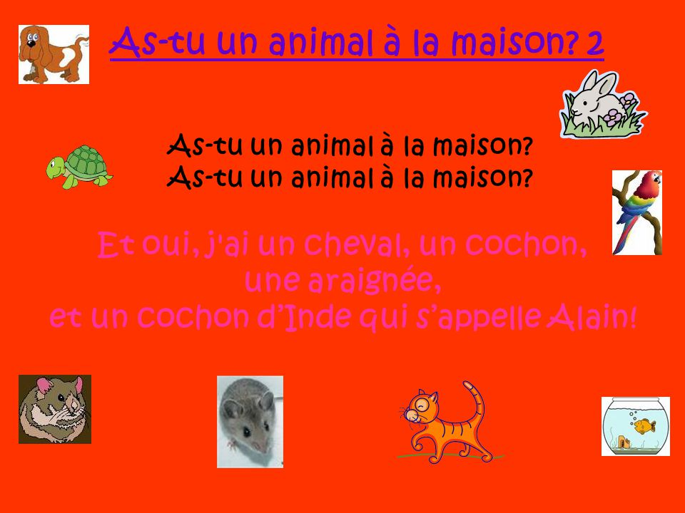 As-tu un animal à la maison 2