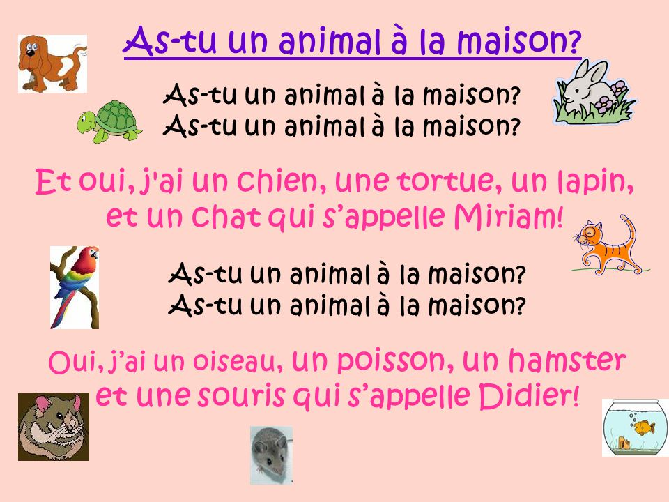 As-tu un animal à la maison et un chat qui s'appelle Miriam!