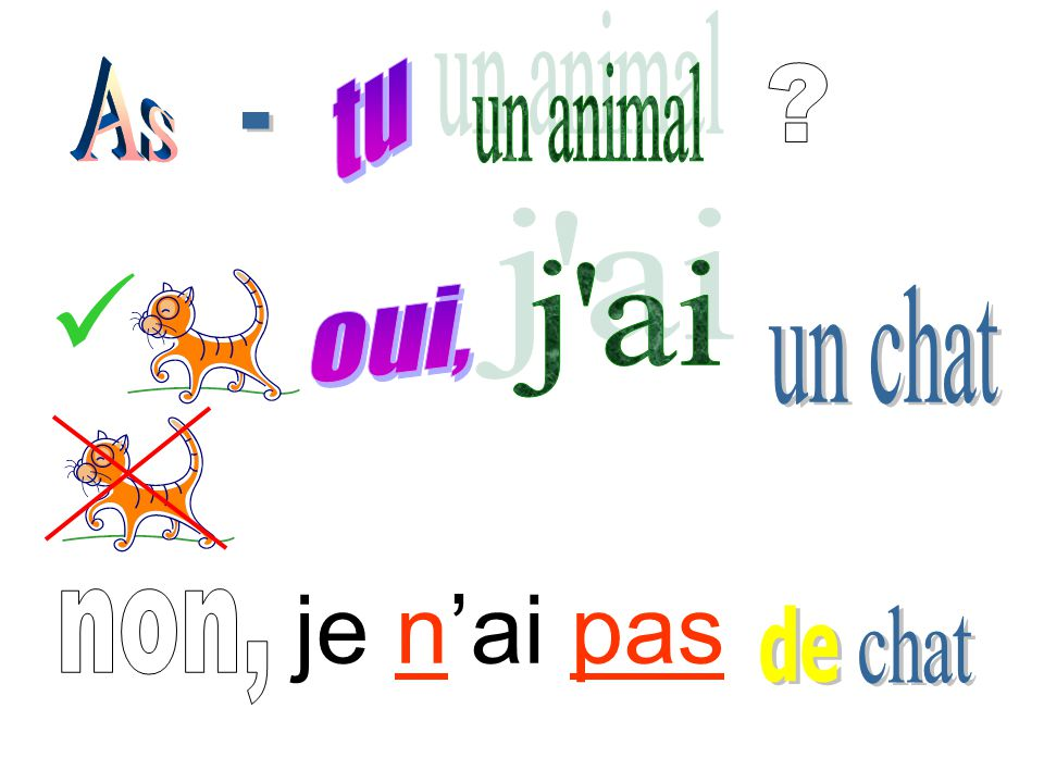 je n'ai pas de As tu un animal __ j ai oui, un chat non, chat