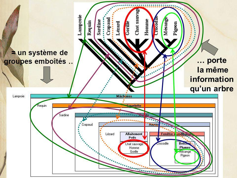 = un système de groupes emboîtés … la même information qu'un arbre