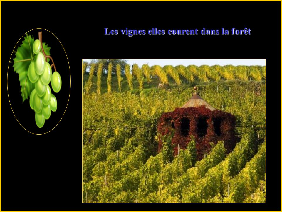 Les vignes elles courent dans la forêt