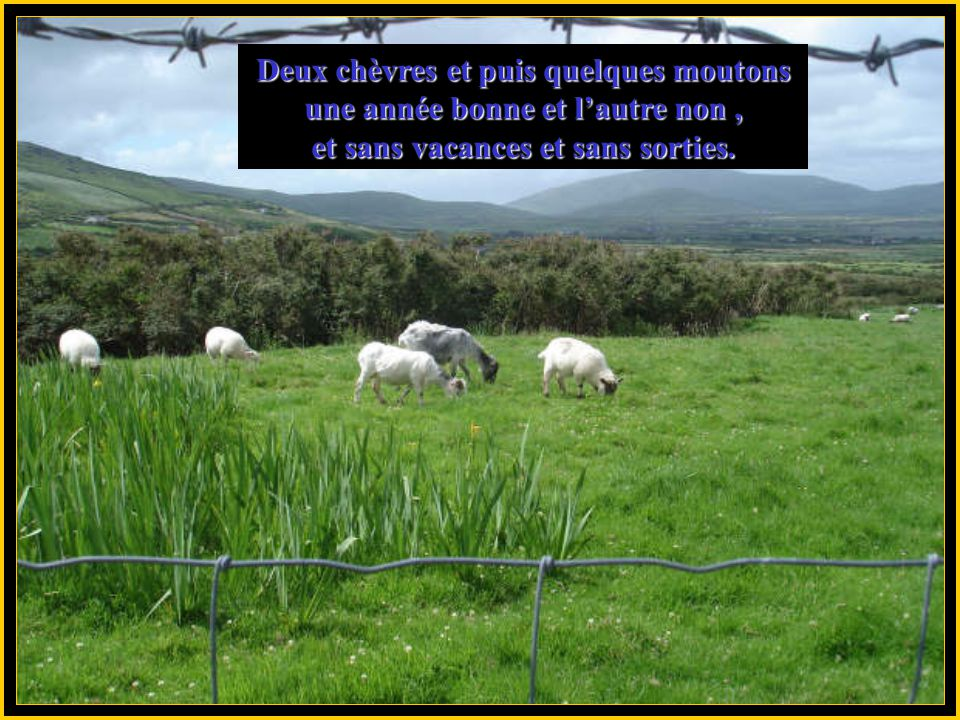 Deux chèvres et puis quelques moutons une année bonne et l'autre non ,