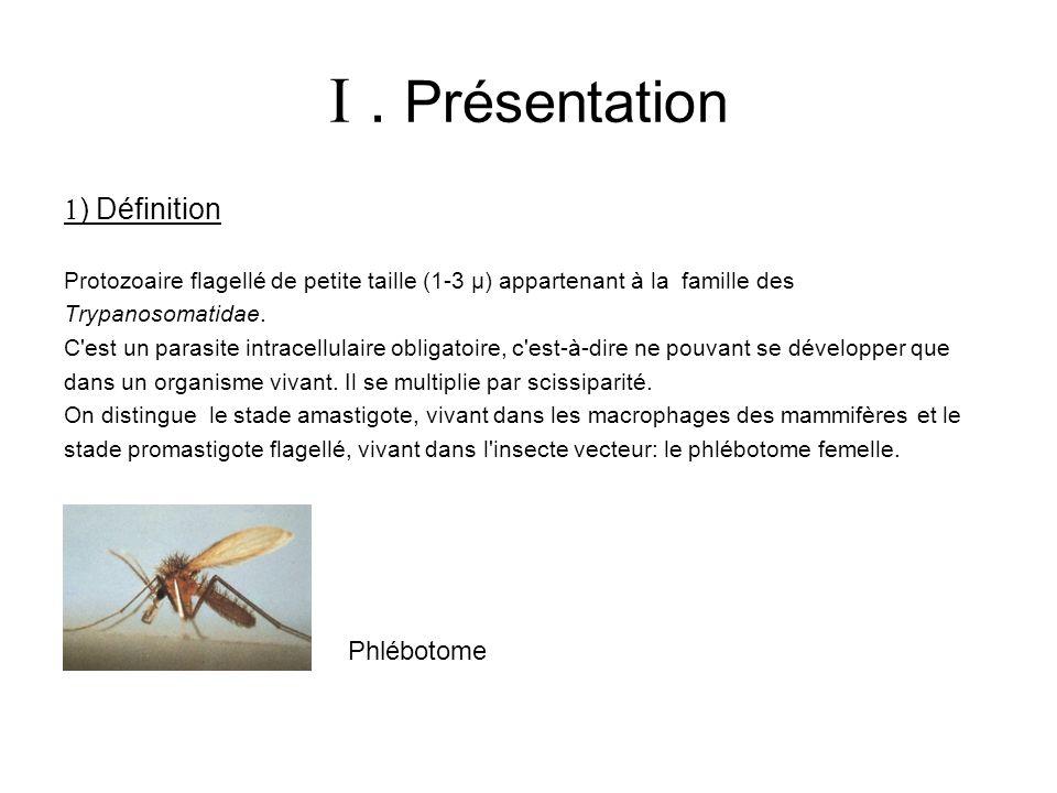  . Présentation ) Définition Phlébotome