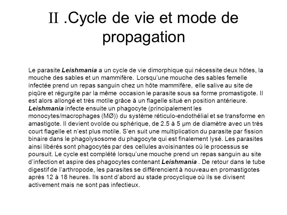  .Cycle de vie et mode de propagation