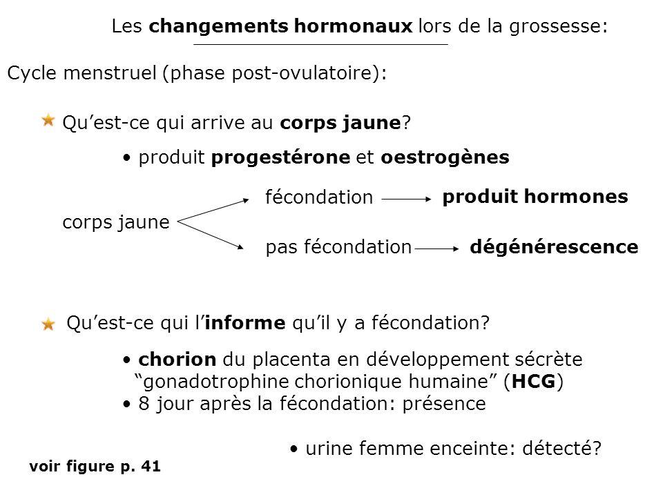 Les changements hormonaux lors de la grossesse: