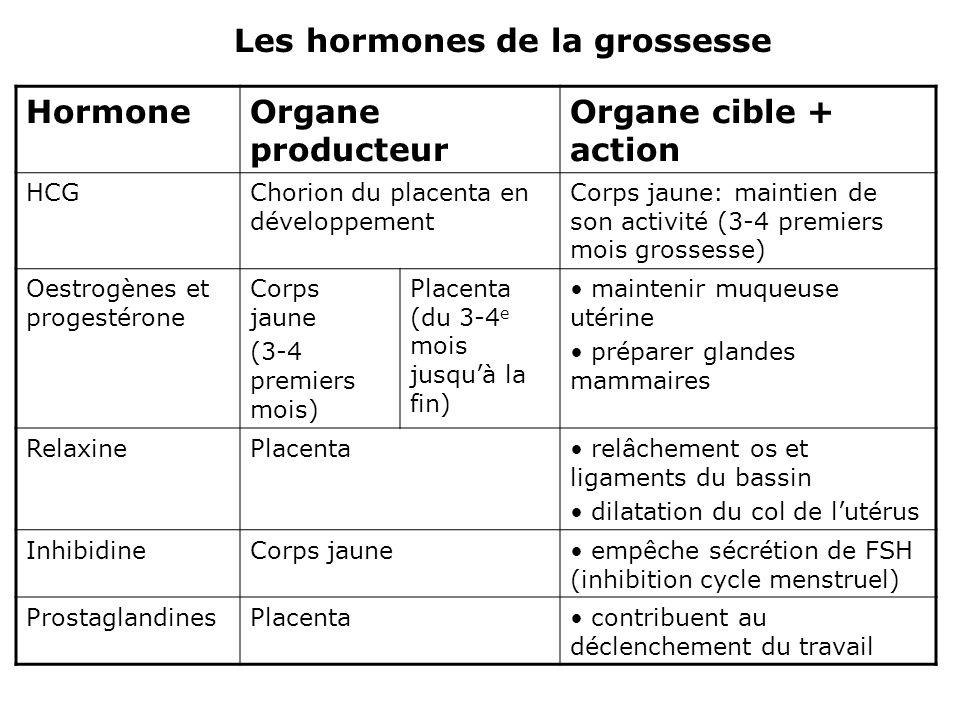 Les hormones de la grossesse Hormone Organe producteur