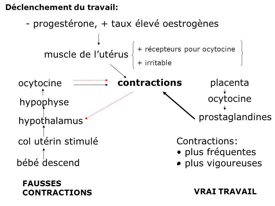 - progestérone, + taux élevé oestrogènes
