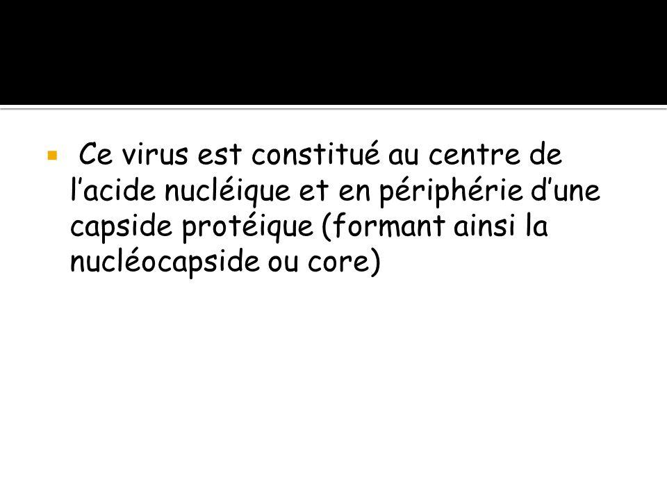 STRUCTURE Ce virus est constitué au centre de l'acide nucléique et en périphérie d'une capside protéique (formant ainsi la nucléocapside ou core)