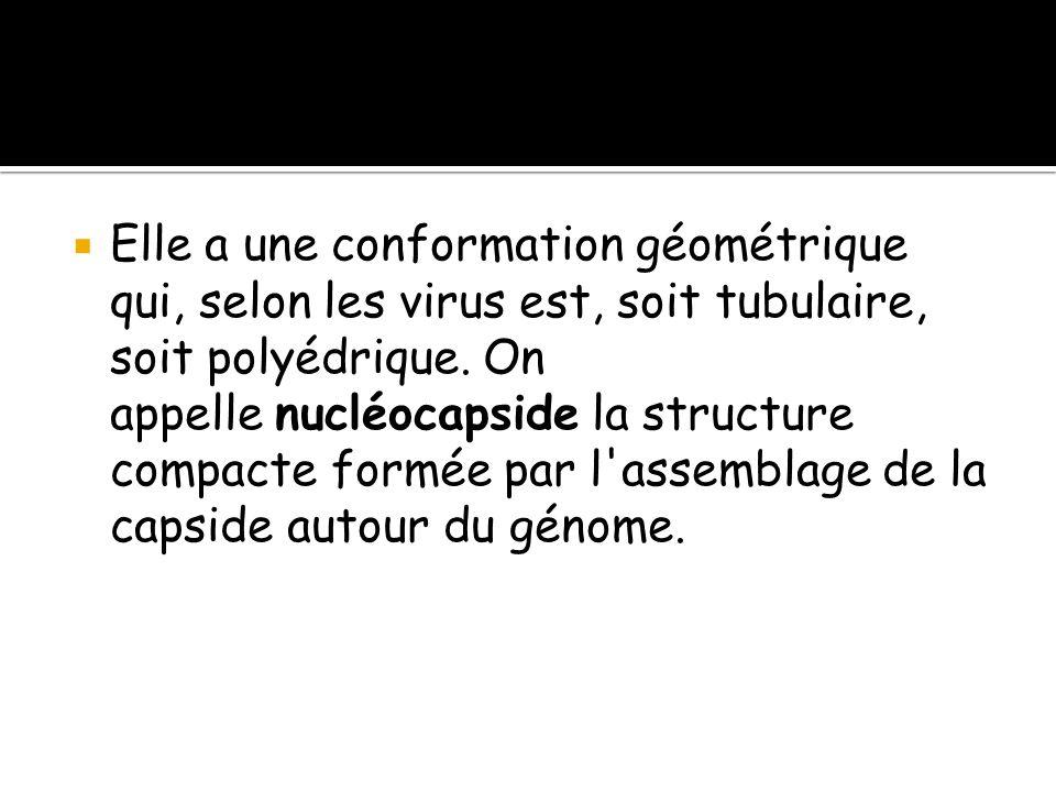 Elle a une conformation géométrique qui, selon les virus est, soit tubulaire, soit polyédrique.
