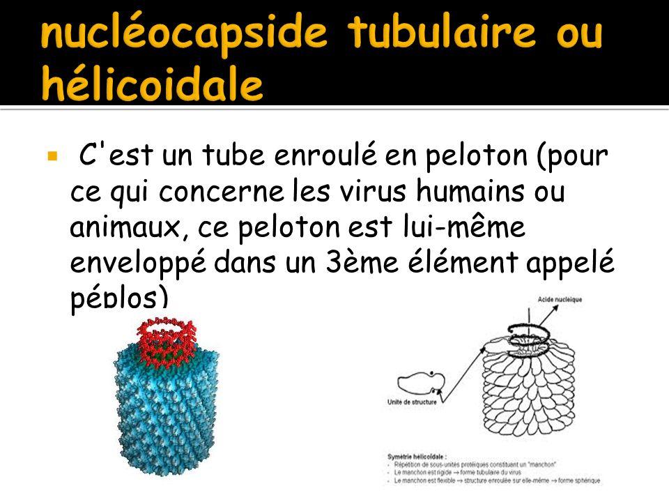nucléocapside tubulaire ou hélicoidale