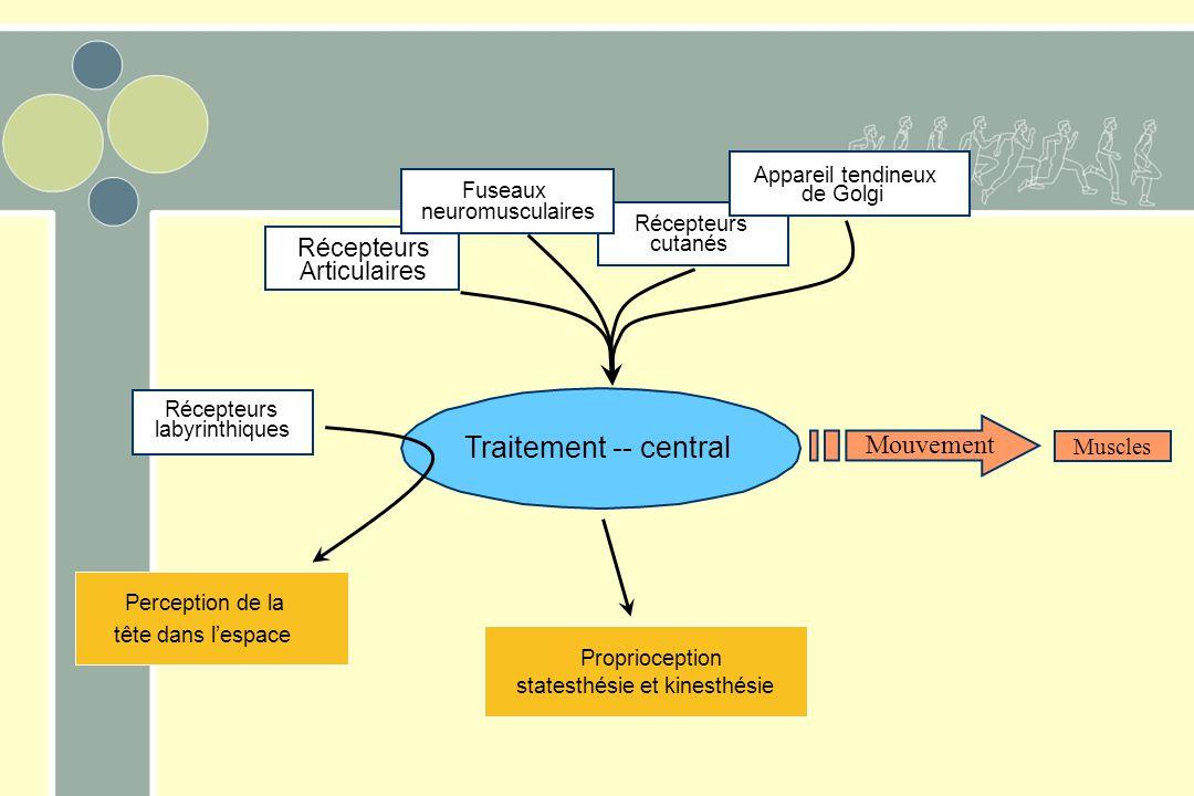 Traitement -- central Mouvement Récepteurs Articulaires Muscles