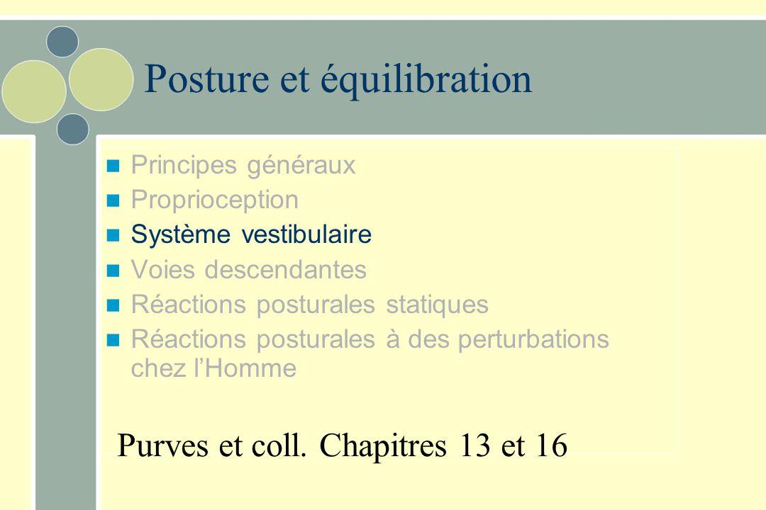 Posture et équilibration