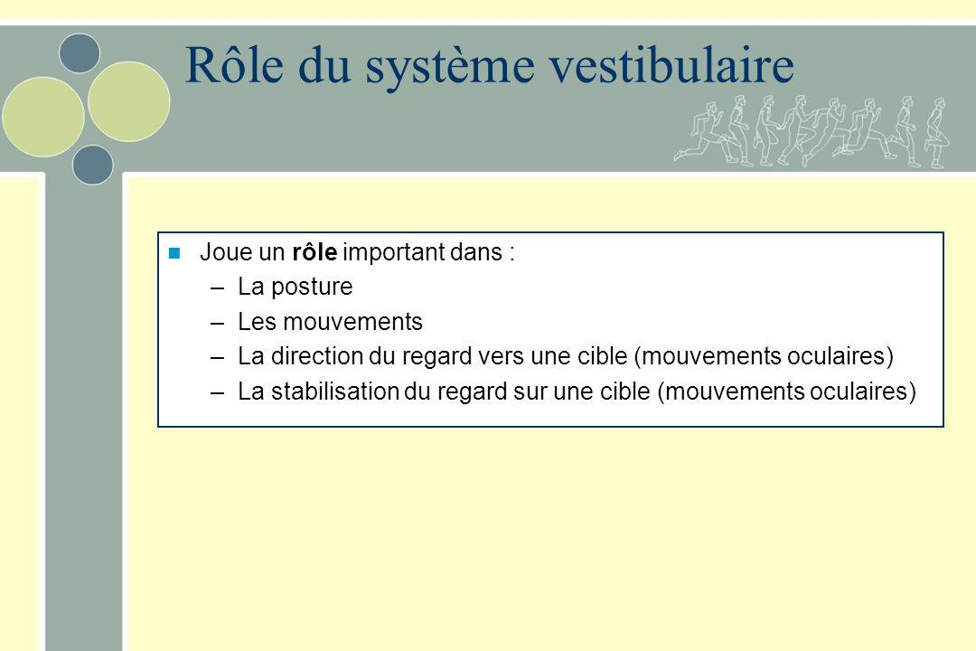Rôle du système vestibulaire