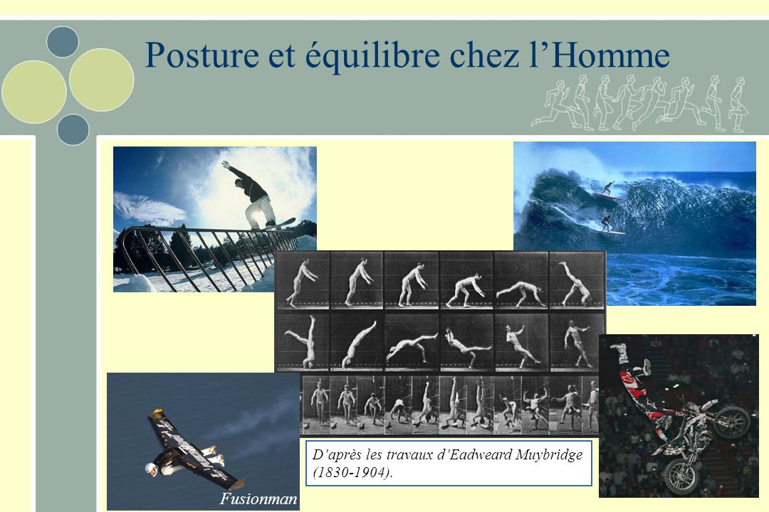 Posture et équilibre chez l'Homme
