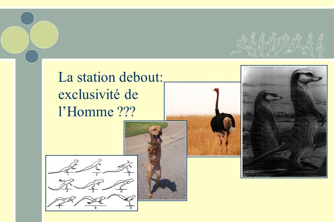 La station debout: exclusivité de l'Homme