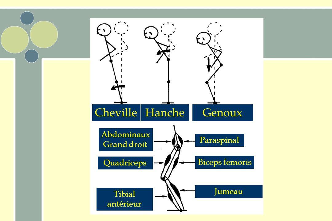 Cheville Hanche Genoux Abdominaux Grand droit Paraspinal Quadriceps