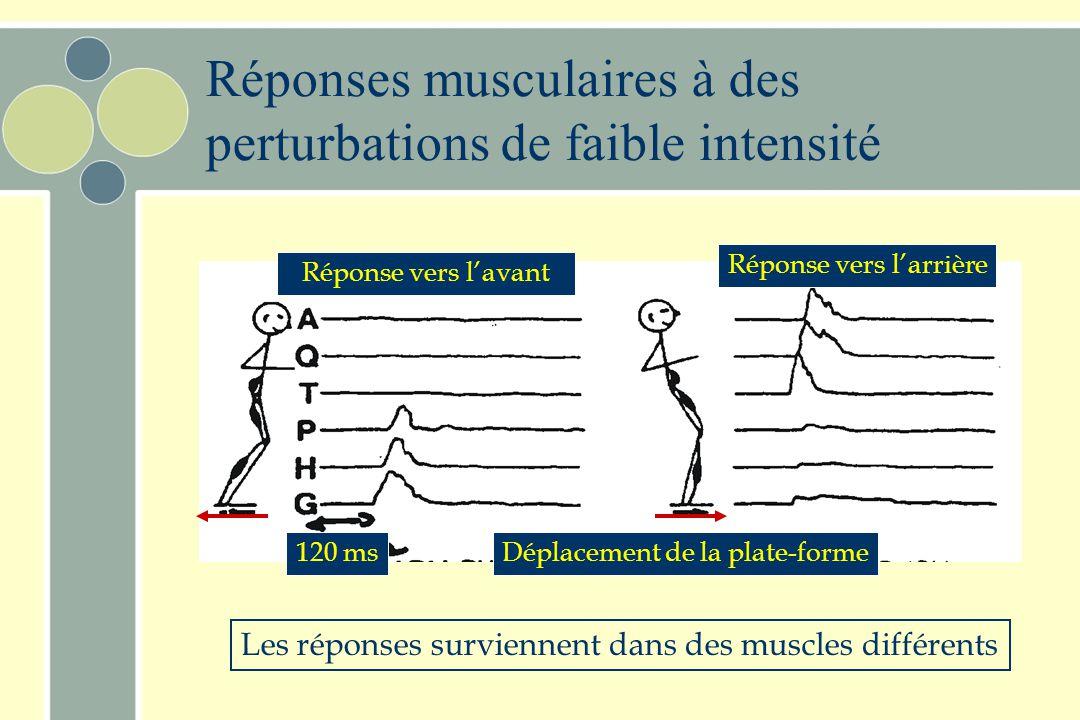 Réponses musculaires à des perturbations de faible intensité