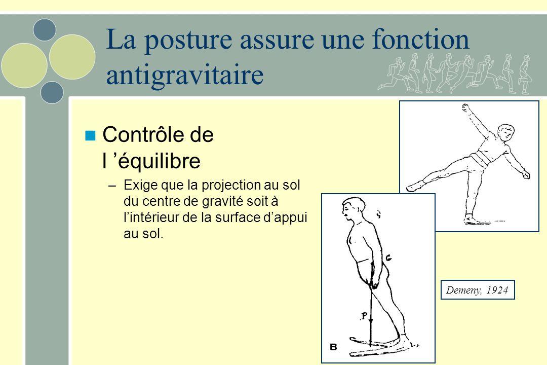 La posture assure une fonction antigravitaire