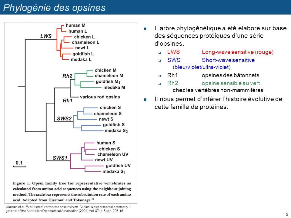 Phylogénie des opsines
