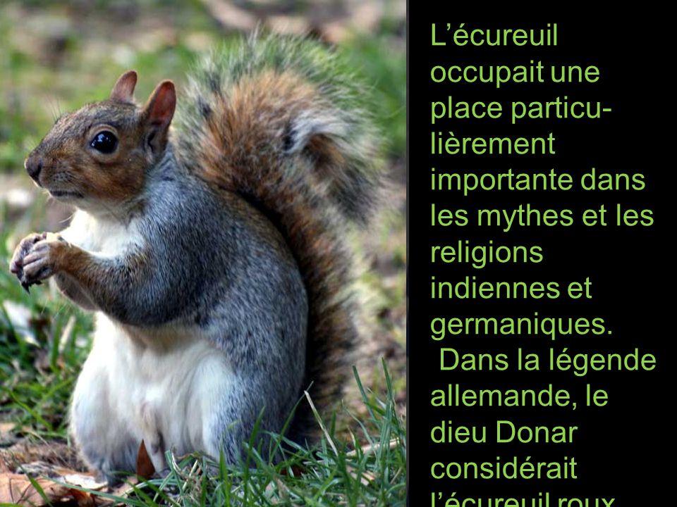 L'écureuil occupait une place particu-lièrement importante dans les mythes et les religions indiennes et germaniques.