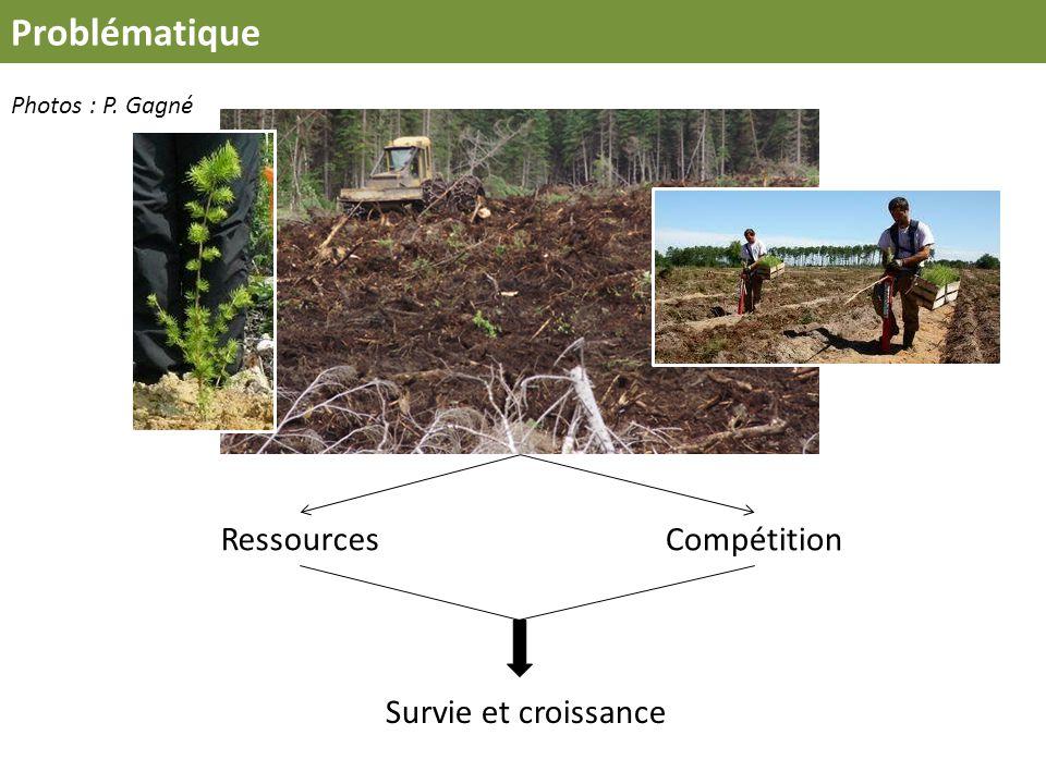 Problématique Ressources Compétition Survie et croissance