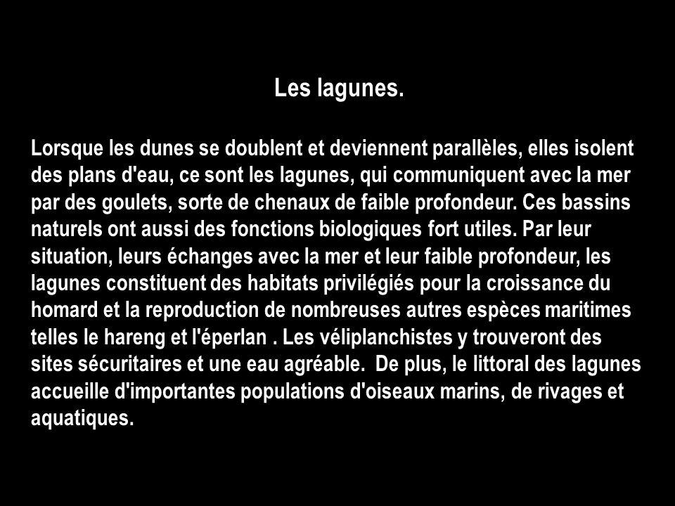 Les lagunes.