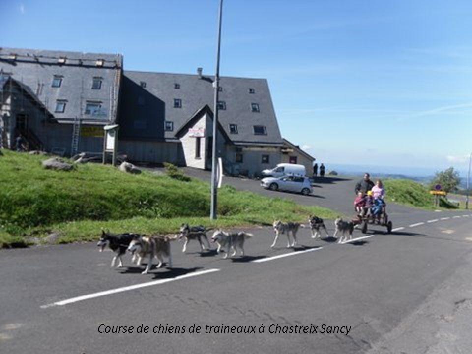 Course de chiens de traineaux à Chastreix Sancy