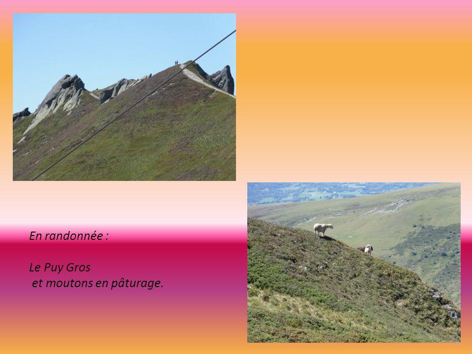 En randonnée : Le Puy Gros et moutons en pâturage.