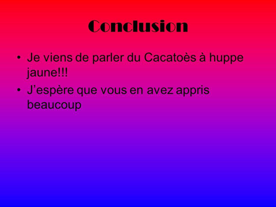 Conclusion Je viens de parler du Cacatoès à huppe jaune!!!