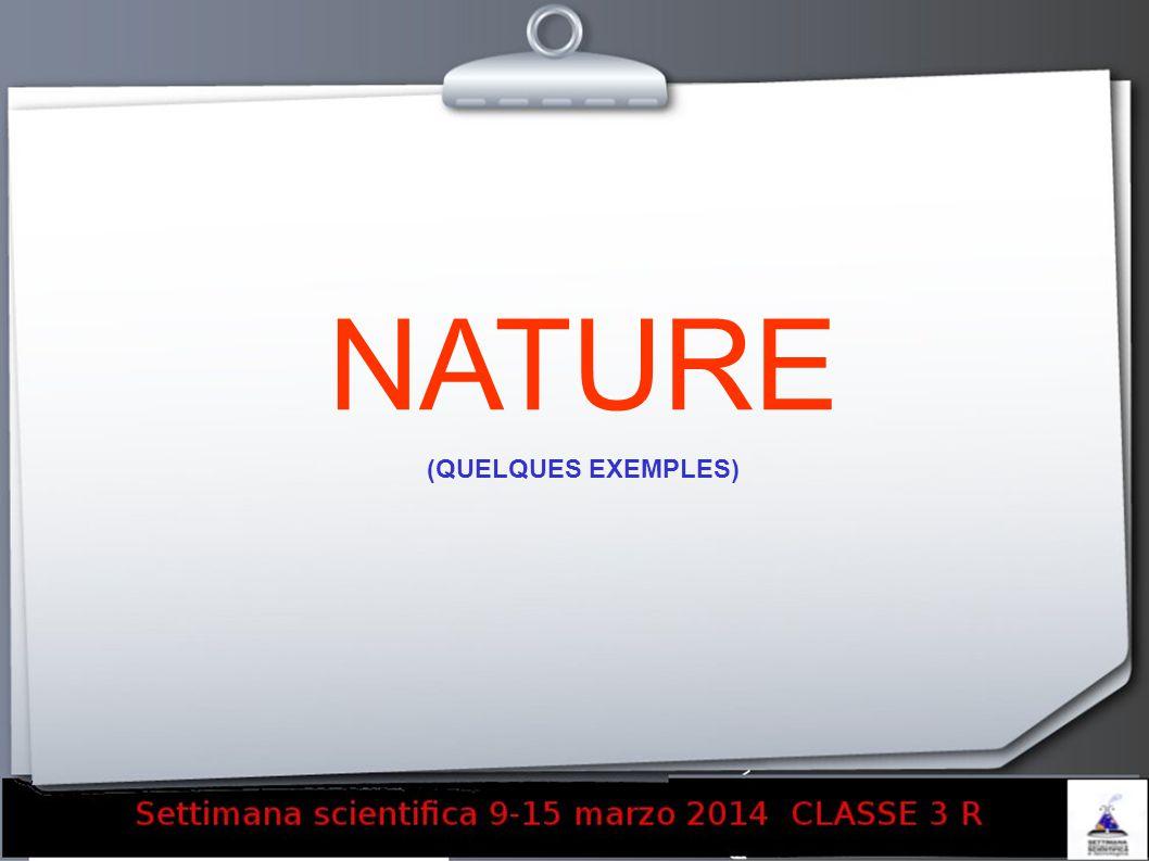 NATURE (QUELQUES EXEMPLES) 13