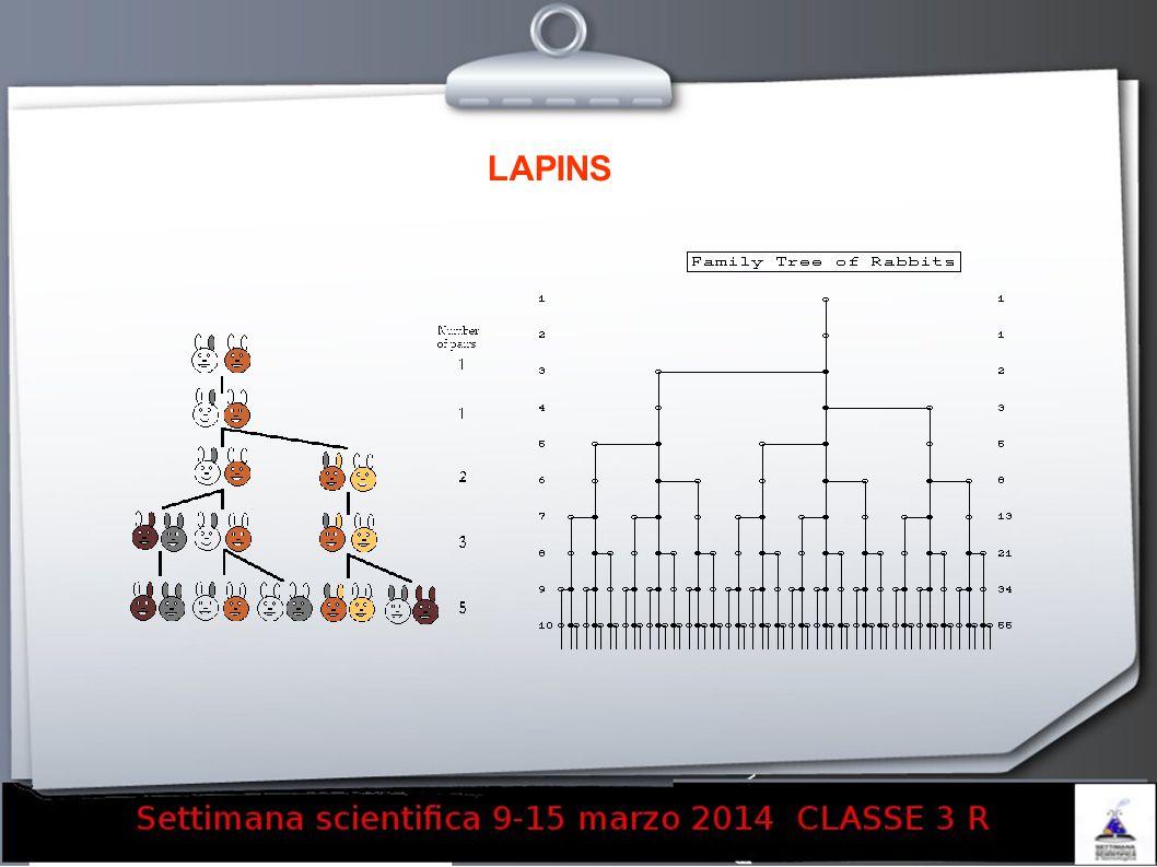 LAPINS 15