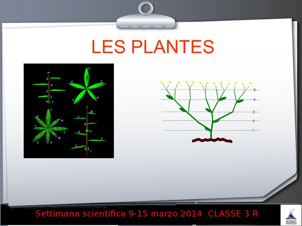 LES PLANTES 16