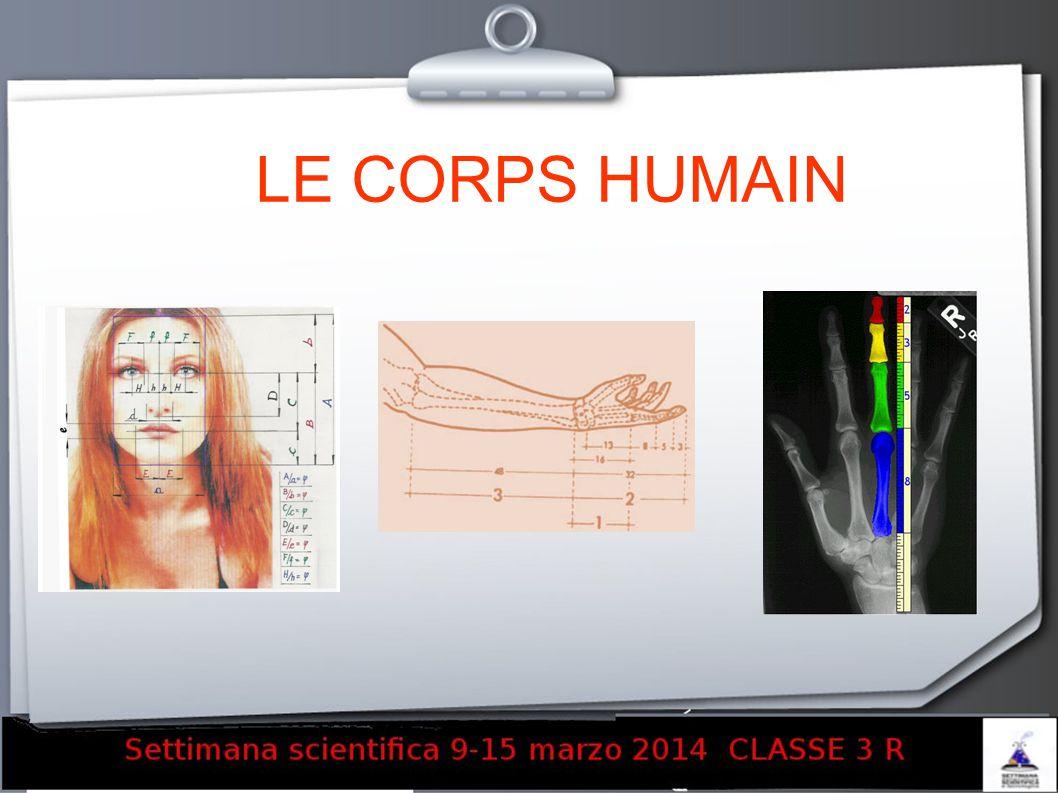 LE CORPS HUMAIN 17