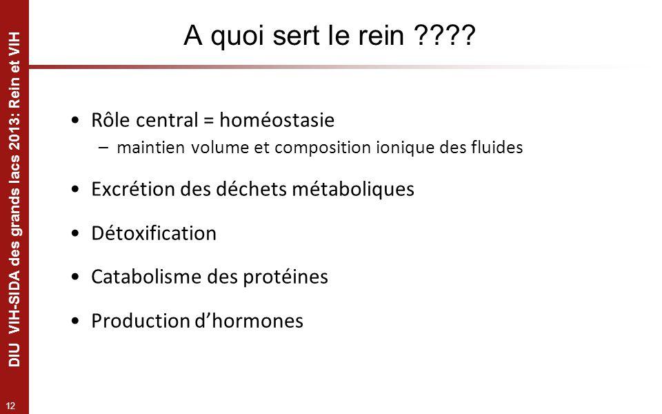 A quoi sert le rein Rôle central = homéostasie