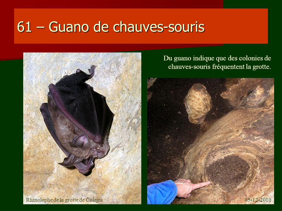 61 – Guano de chauves-souris