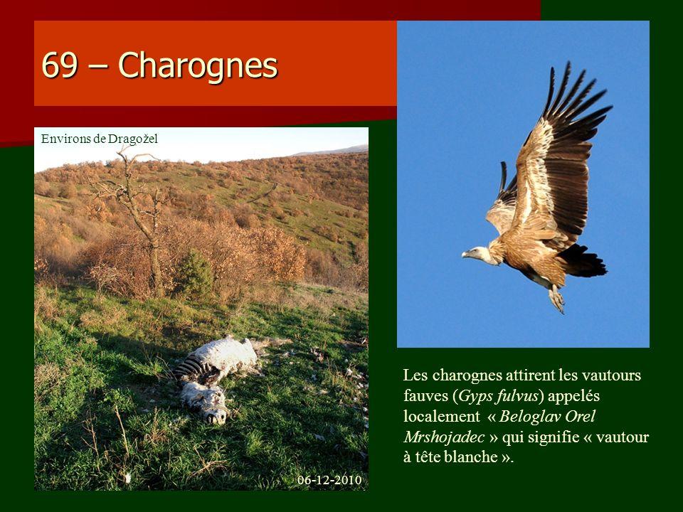 69 – Charognes Environs de Dragožel.