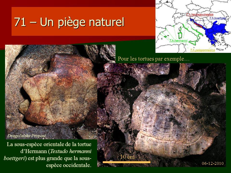 71 – Un piège naturel Pour les tortues par exemple…