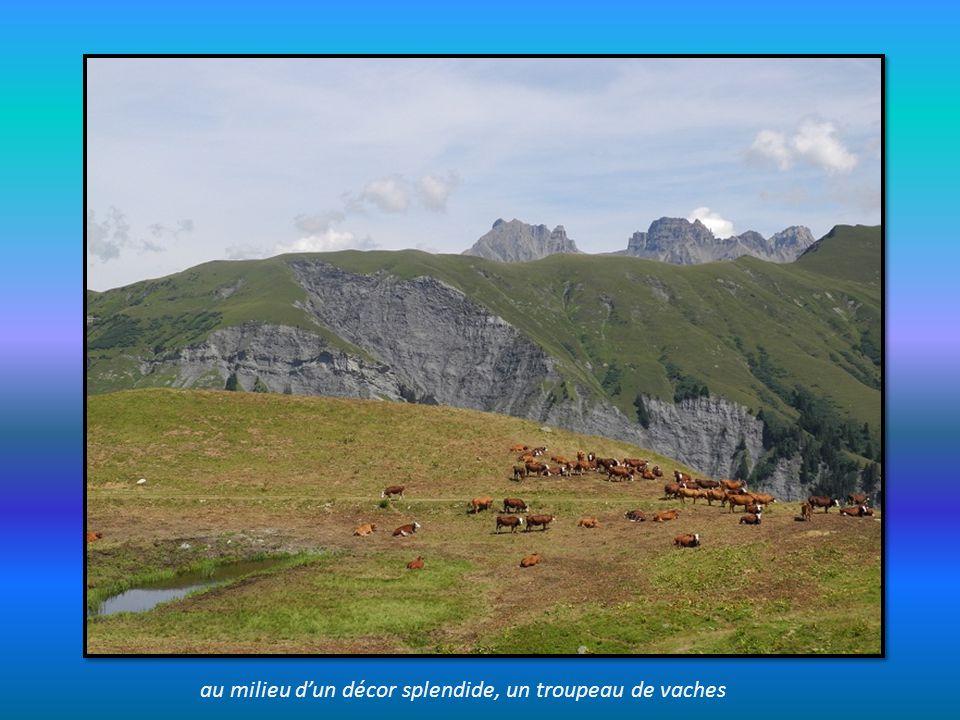 au milieu d'un décor splendide, un troupeau de vaches