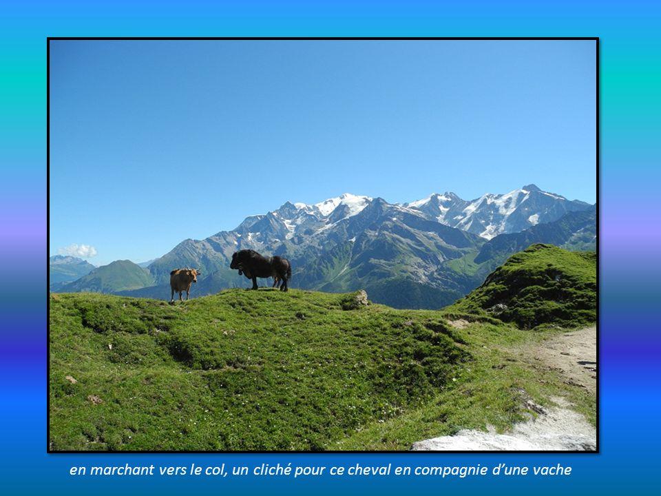 en marchant vers le col, un cliché pour ce cheval en compagnie d'une vache