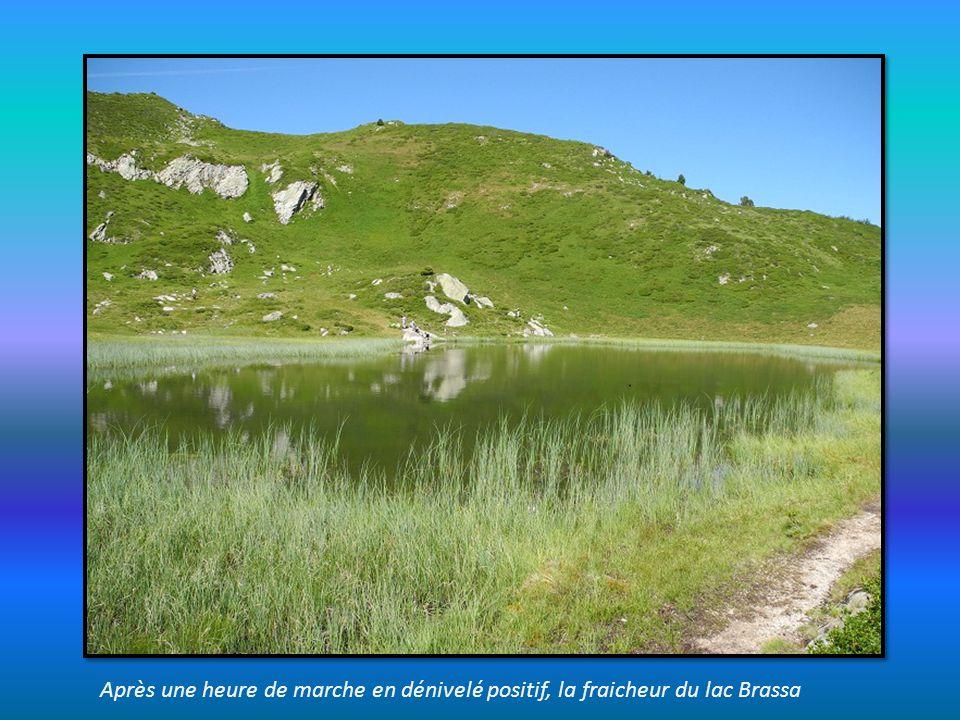 Après une heure de marche en dénivelé positif, la fraicheur du lac Brassa