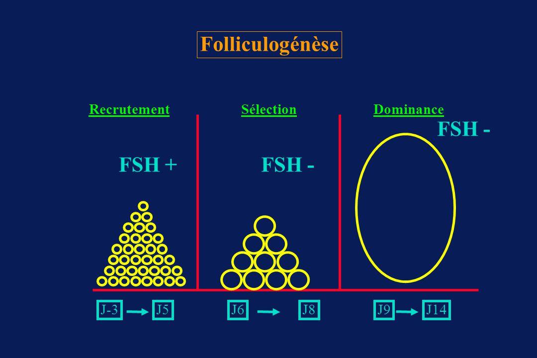 Folliculogénèse FSH - FSH + FSH - Recrutement Sélection Dominance J-3