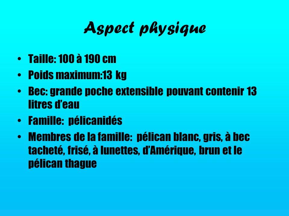 Aspect physique Taille: 100 à 190 cm Poids maximum:13 kg