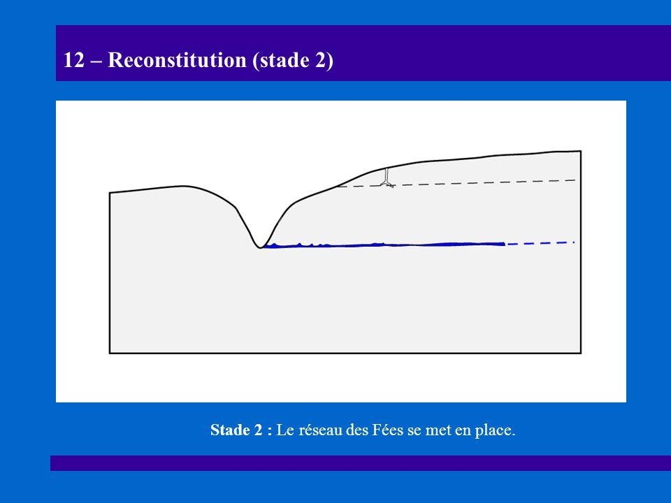 12 – Reconstitution (stade 2)