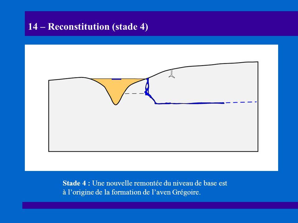 14 – Reconstitution (stade 4)