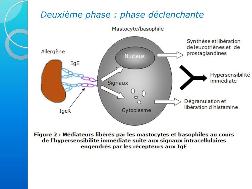 Deuxième phase : phase déclenchante