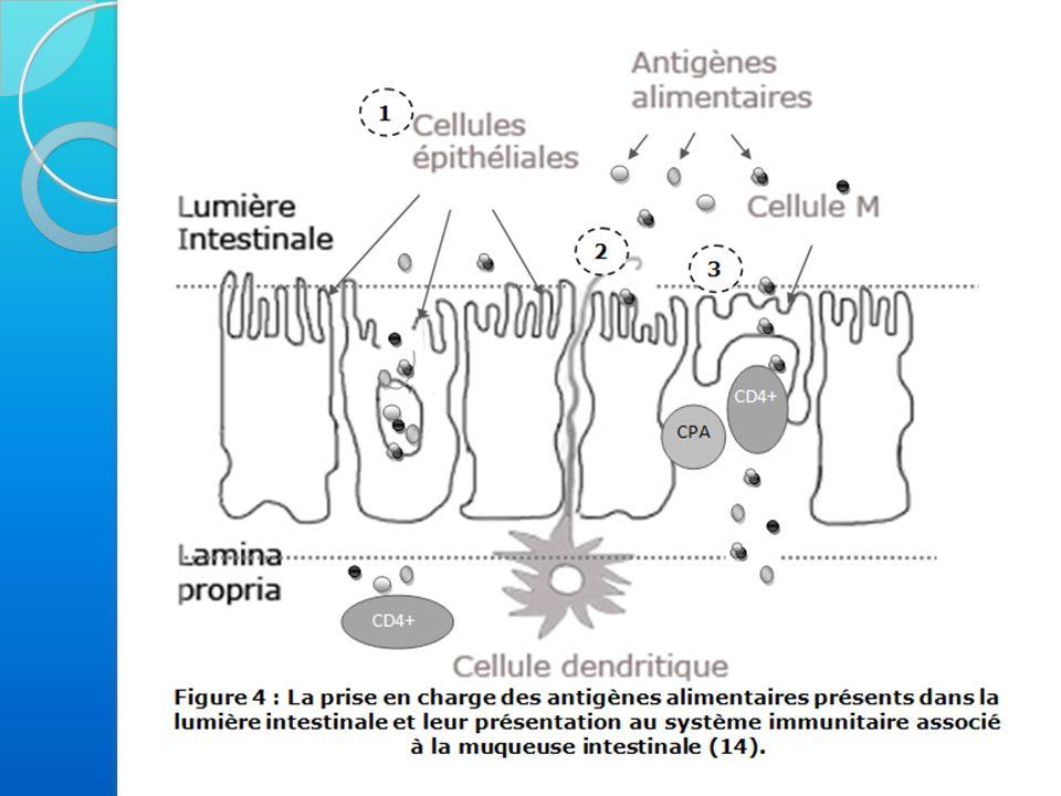 2 - Mécanisme de l'allergie